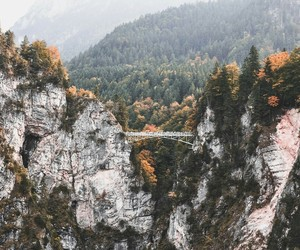 autumn, fall, and photography image