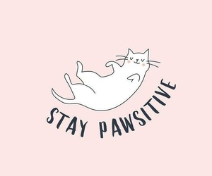 cat, positive, and pink image