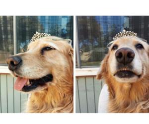 dog, animal, and swetty image