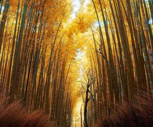 autumn, fall, and japan image