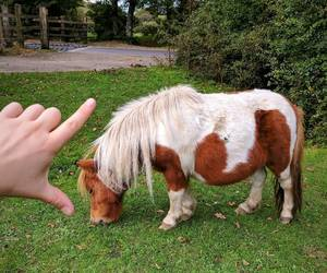 horse, miniature, and pony image