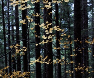nature, forest, and leaves image