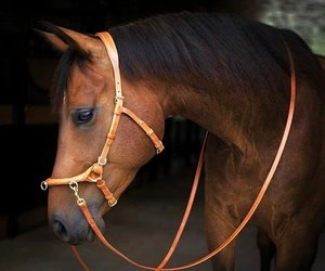 animal, beautiful, and bridle image