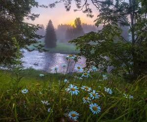 animal, beautiful, and flowers image