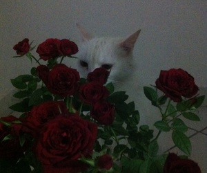 cat, flower, and red image