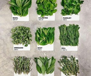 green, herbs, and instagram image