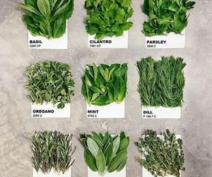 green, vegan, and herbs image