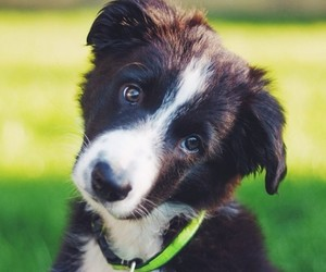 animals, dogs, and puppies image