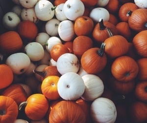 fall, autumn, and pumpkins image