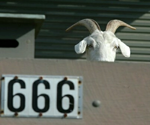 666, goat, and satan image