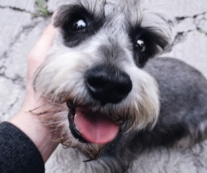 dogs, happy, and doggo image
