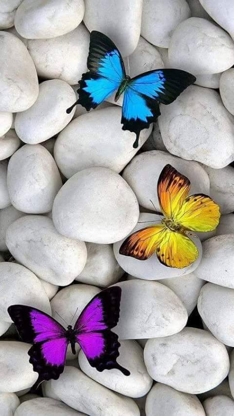 butterfly, wallpaper, and rocks image