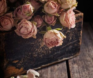 background, old, and pink roses image