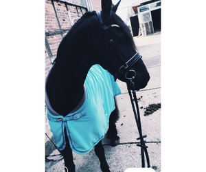 horse, cute, and friese image