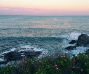 nature, sea, and flowers image