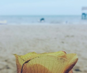 beach, yellow, and blue image