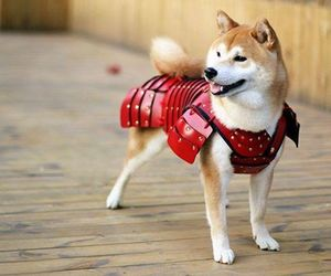 dog and japan image