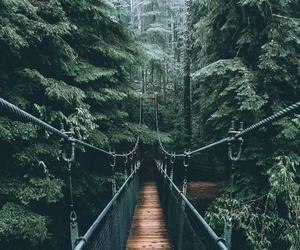 bridge, forest, and suspension bridge image