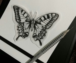 art, butterfly, and illustration image