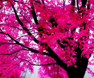 autumn, pink, and pink style image