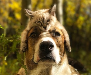 animal, cat, and dog image