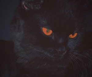 cat and black image