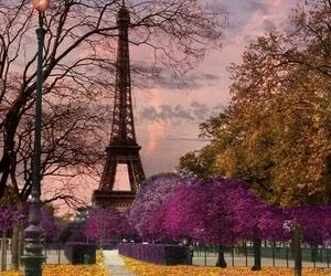 autumn, paris, and photography image