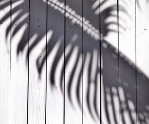 shadow, white, and summer image
