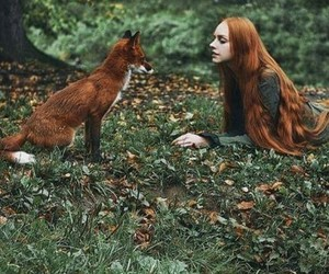 fox, autumn, and forest image