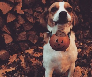 autumn, dog, and Halloween image