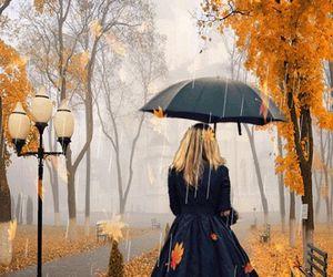 rain, autumn, and gif image