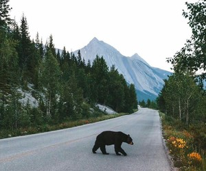 aesthetic, bear, and mountains image
