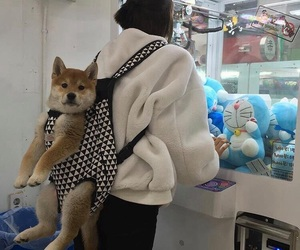 dog, aesthetic, and puppy image