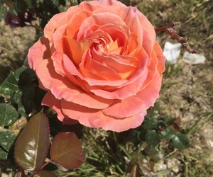 foto, rosa, and verde image