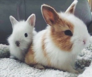 cute, pet, and animals image