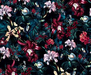 background, flowers, and botanical image
