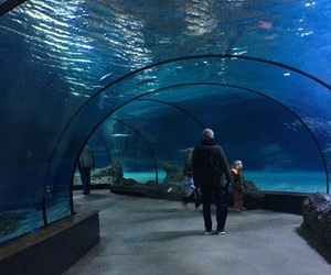 tunnel, water, and acquario image