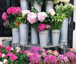 beuty, pink, and flowers image
