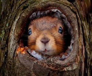 squirrel, animal, and autumn image