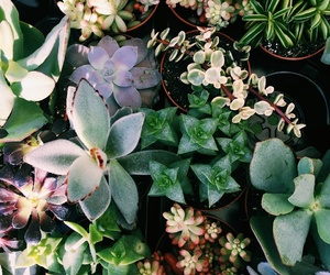 green, succulent, and cute image