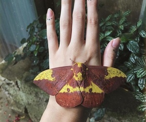 butterflies, hand, and insects image