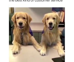 costumer, front desk, and dogs image