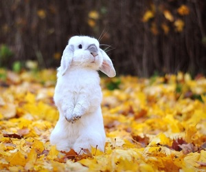 rabbit, autumn, and fall image