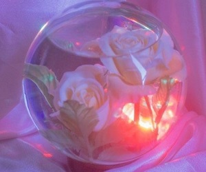 aesthetic, rose, and pink image