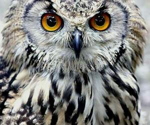 owl and animals image