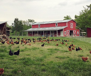 article, country, and farm image