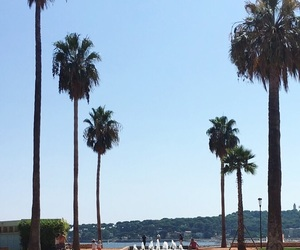 holidays, summer, and palm trees image