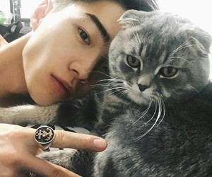 ulzzang, boy, and cat image