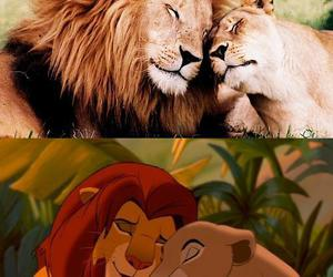 lion, lioness, and lion king image