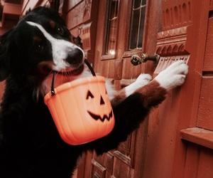 autumn, dog, and tumblr image